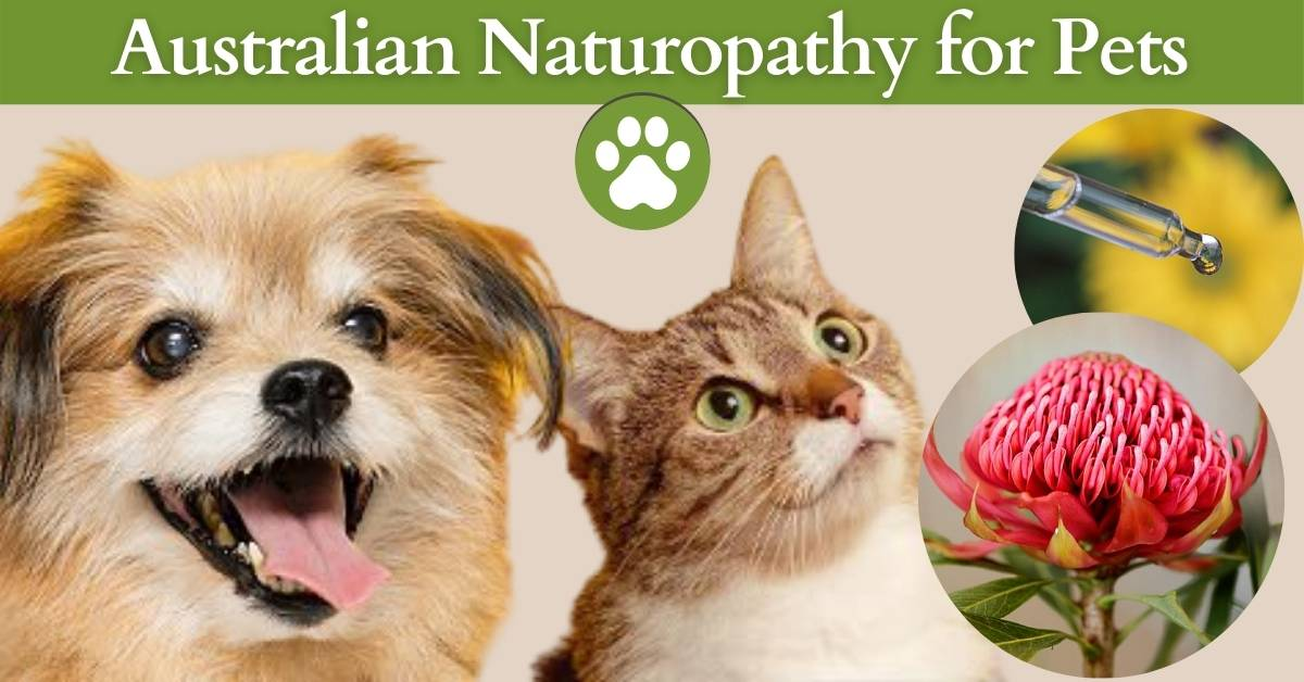 corso pet therapy online